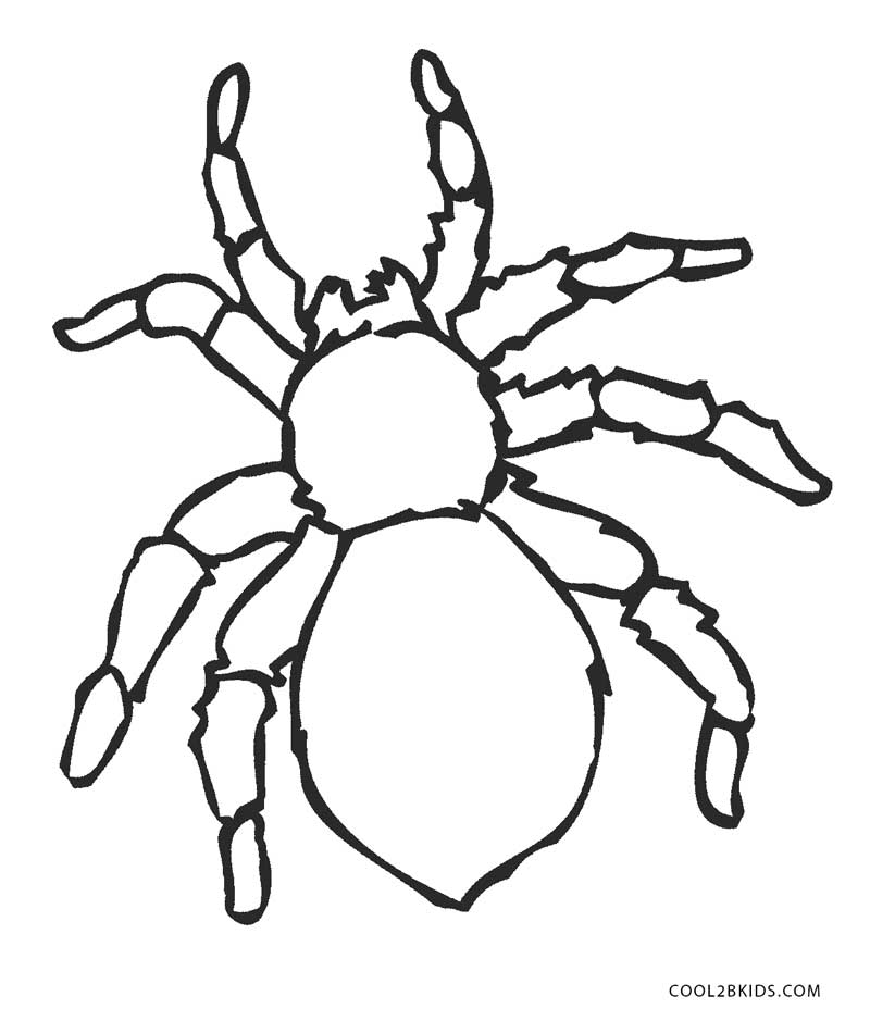spider coloring page free printable spider coloring pages for kids cool2bkids coloring spider page