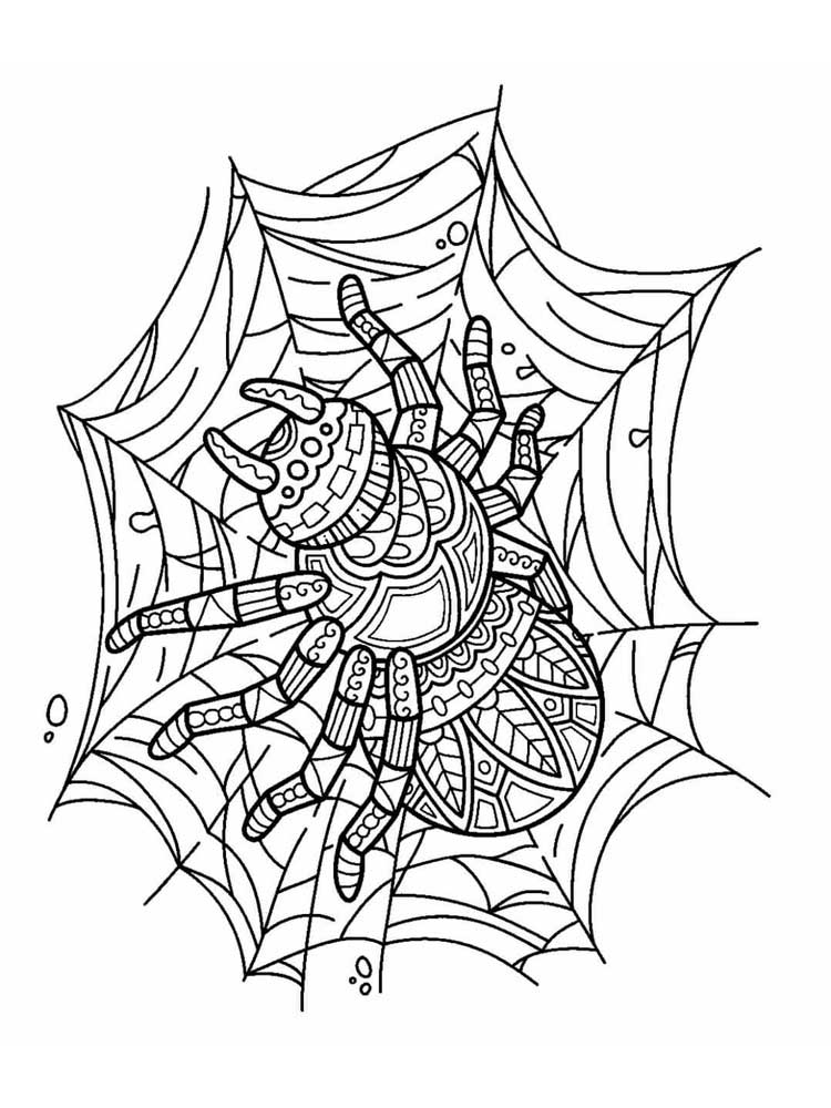 spider coloring page free spider coloring pages for adults printable to coloring page spider