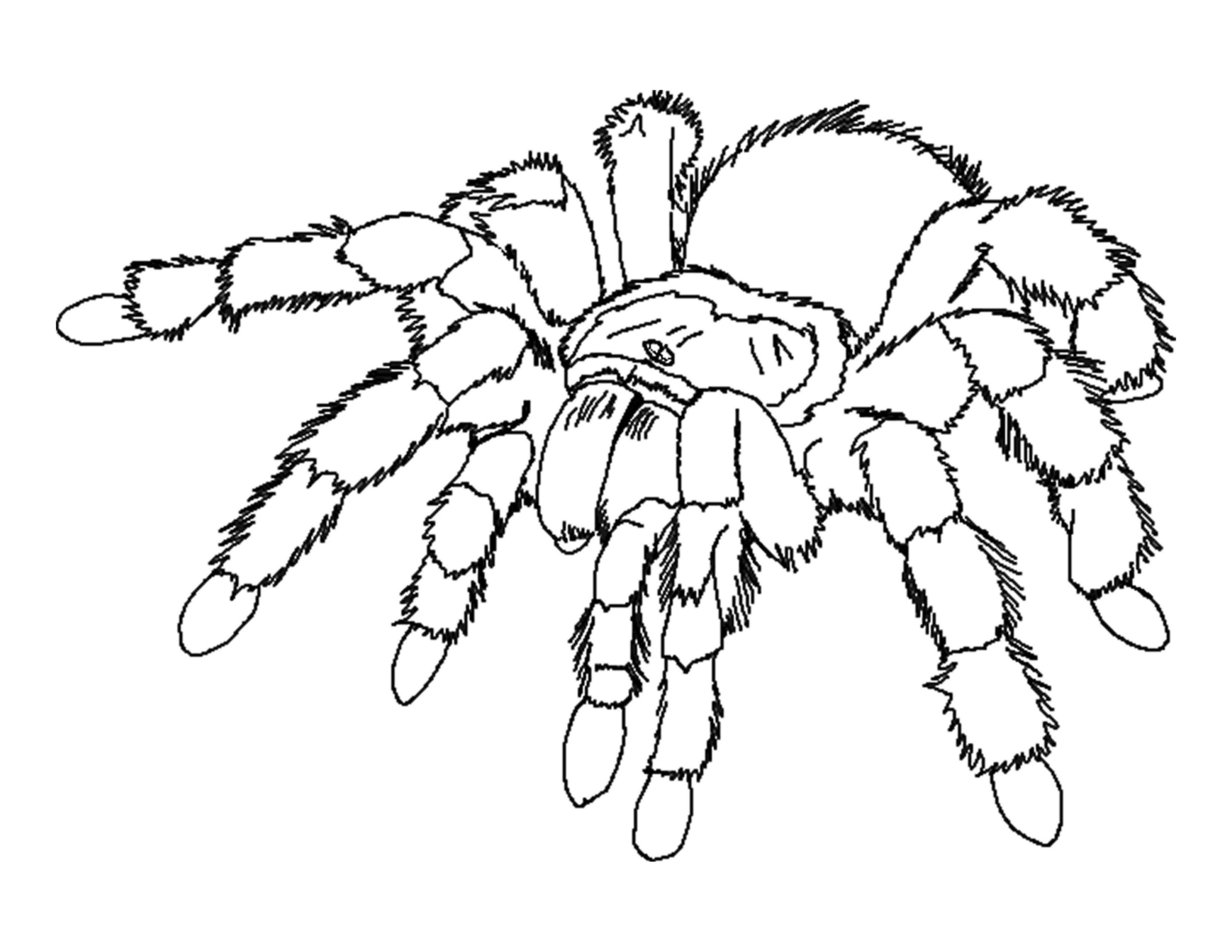spider coloring page spider coloring pages to download and print for free spider coloring page