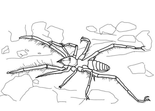tarantula coloring pages 27 free spider coloring pages printable pages coloring tarantula