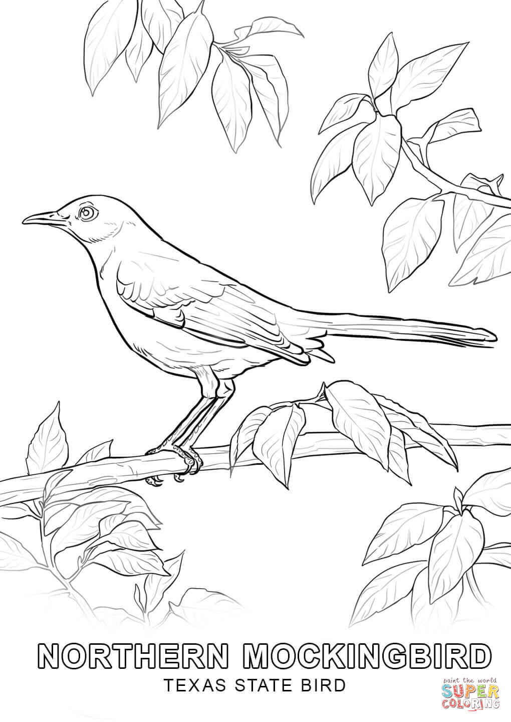 texas state bird coloring page 29 best images about halloween cards on pinterest cut coloring bird state texas page