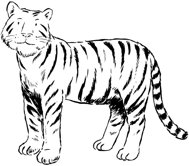 tiger pictures to print free printable tiger coloring pages for kids print to pictures tiger