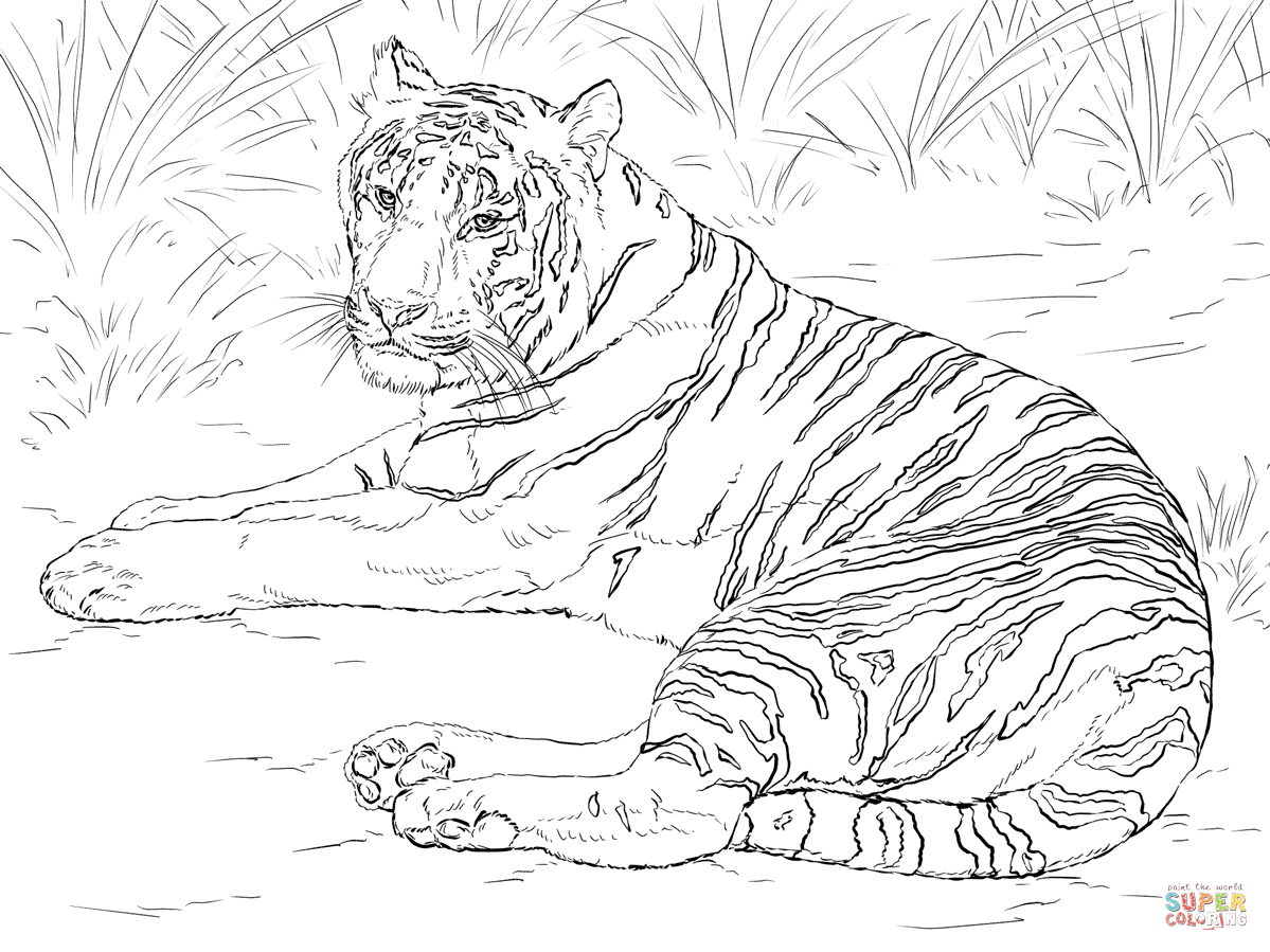 tiger pictures to print free printable tiger coloring pages for kids to pictures print tiger