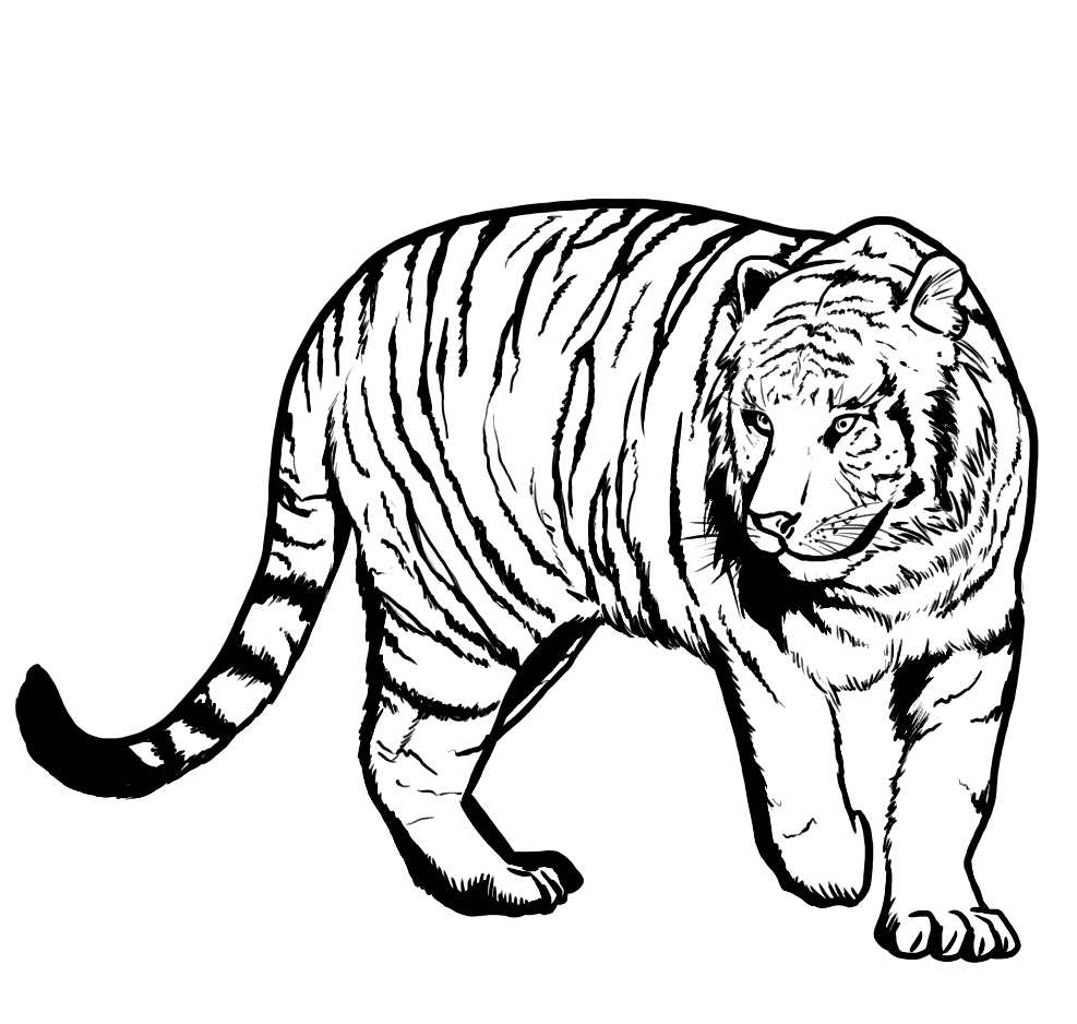 tiger pictures to print free tiger coloring pages tiger print to pictures