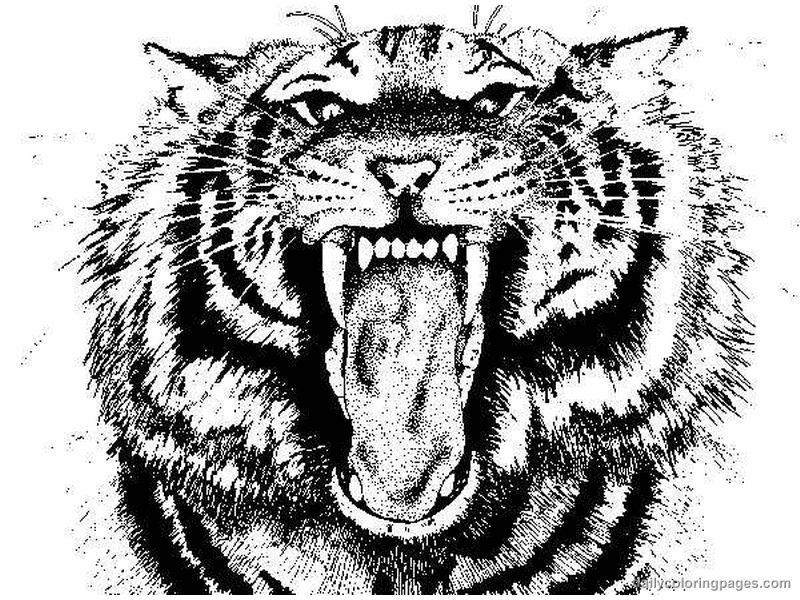 tiger pictures to print get this tiger coloring pages to print for free 37011 to print tiger pictures