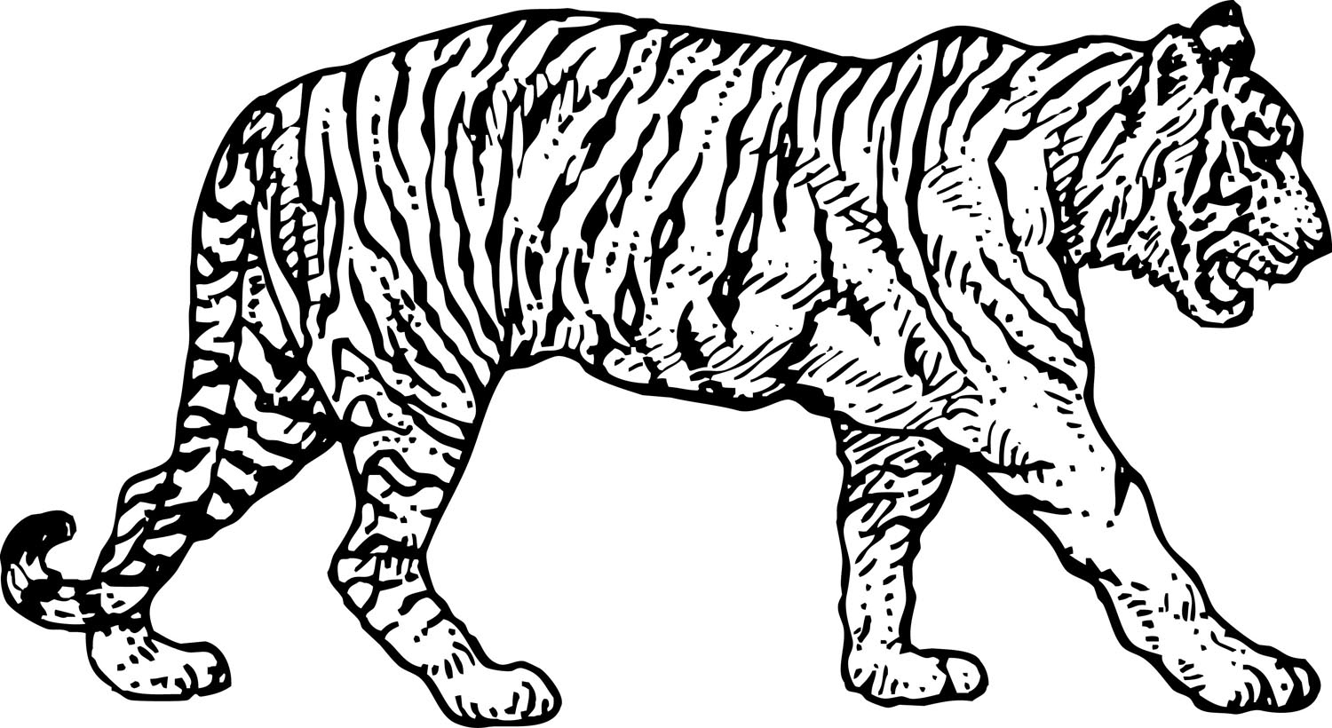 tiger pictures to print tiger coloring pages realistic at getcoloringscom free print pictures to tiger