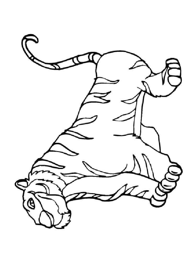 tiger pictures to print tigers coloring pages download and print tigers coloring pictures print to tiger