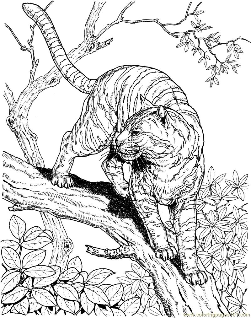 tiger pictures to print tigers coloring pages download and print tigers coloring print to tiger pictures