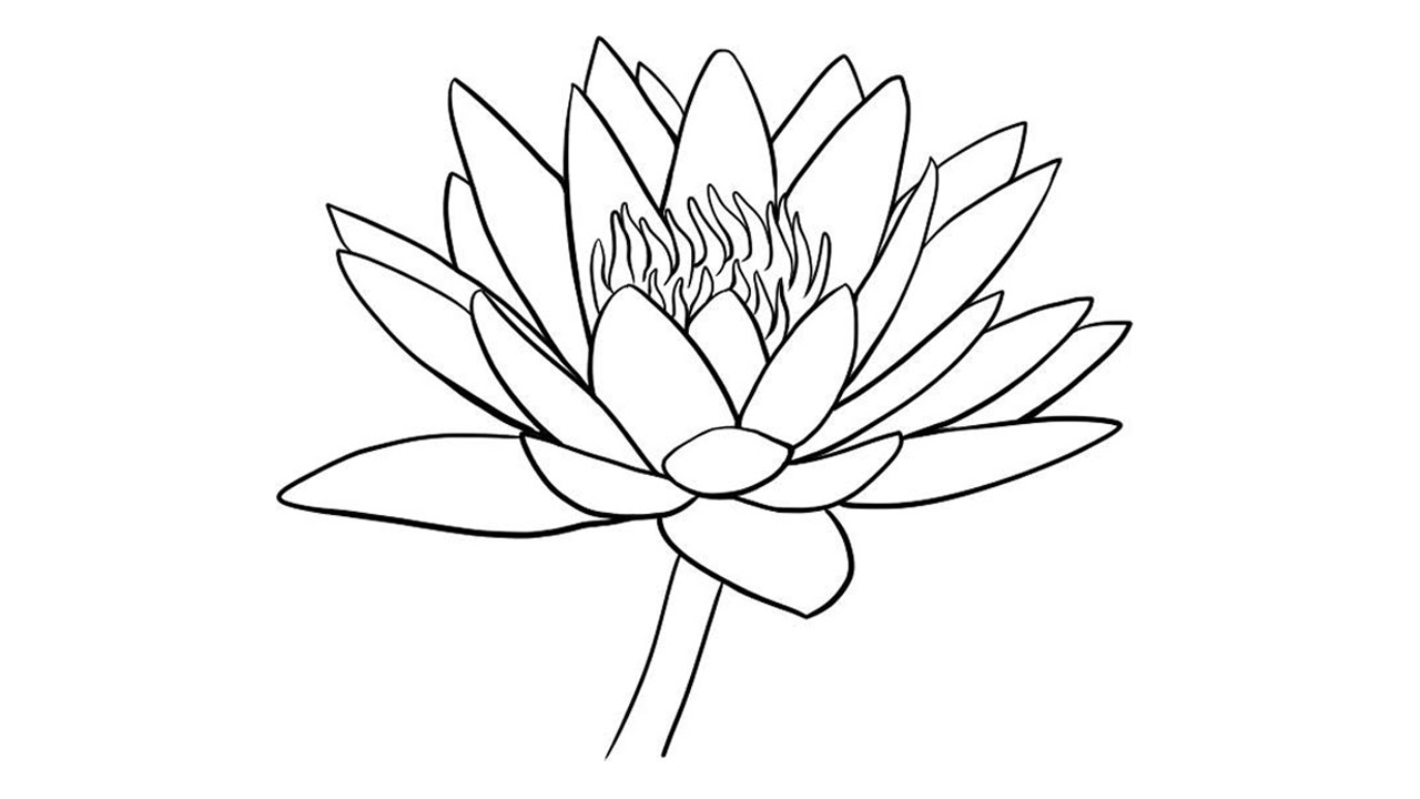 water lily outline lily drawing outline at getdrawings free download outline lily water
