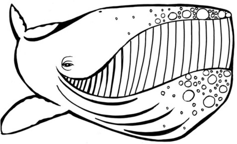 whale coloring pictures free printable killer whale coloring pages for kids whale coloring pictures
