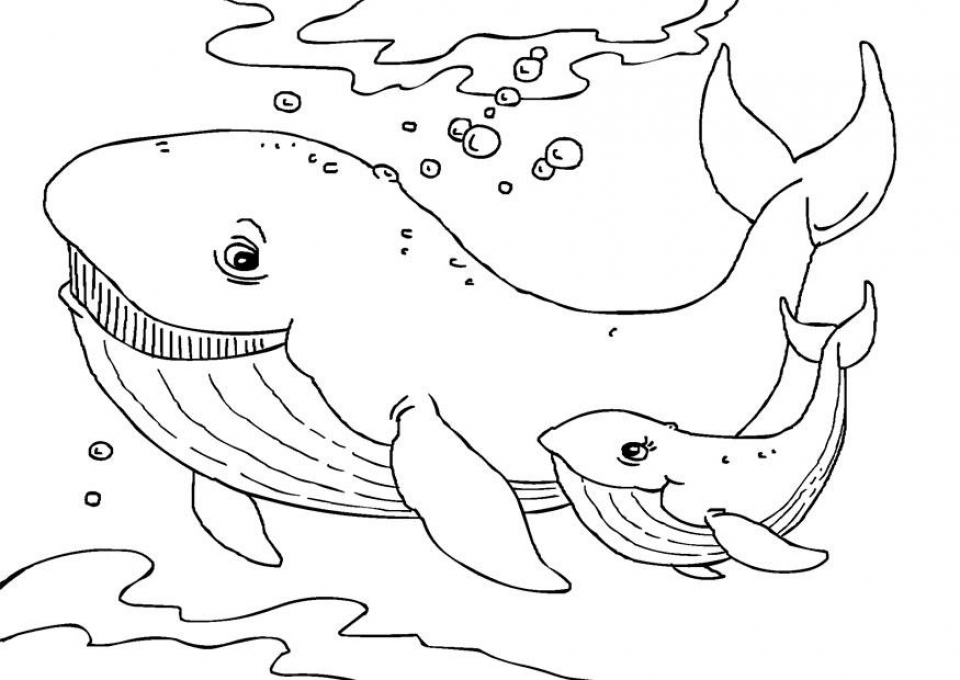 whale coloring pictures free printable whale coloring pages for kids whale pictures coloring