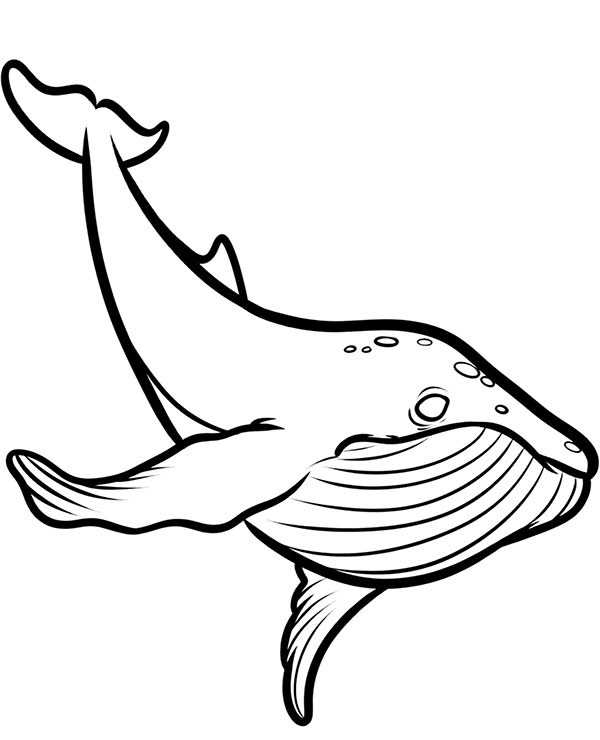 whale coloring pictures whale coloring pages coloring pictures whale