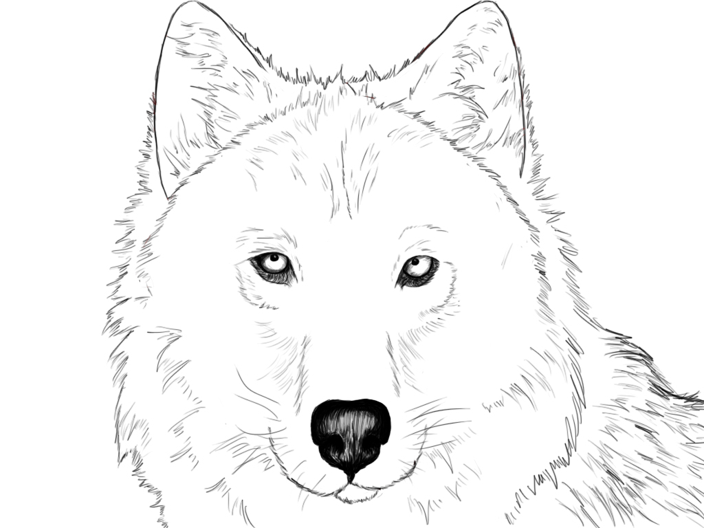 wolf drawing easy angry wolf by therayhem on deviantart wolf easy drawing