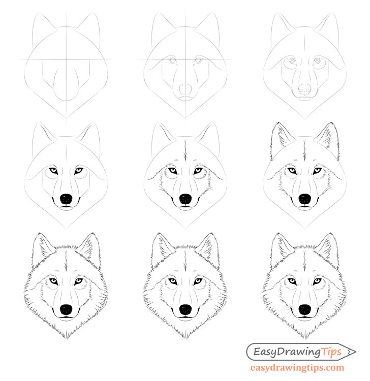 wolf drawing easy easy wolf drawing tutorial at getdrawings free download drawing wolf easy