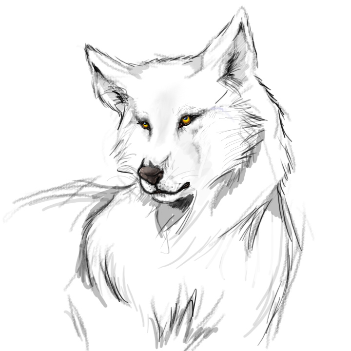 wolf drawing easy easy wolf drawings free download on clipartmag easy drawing wolf