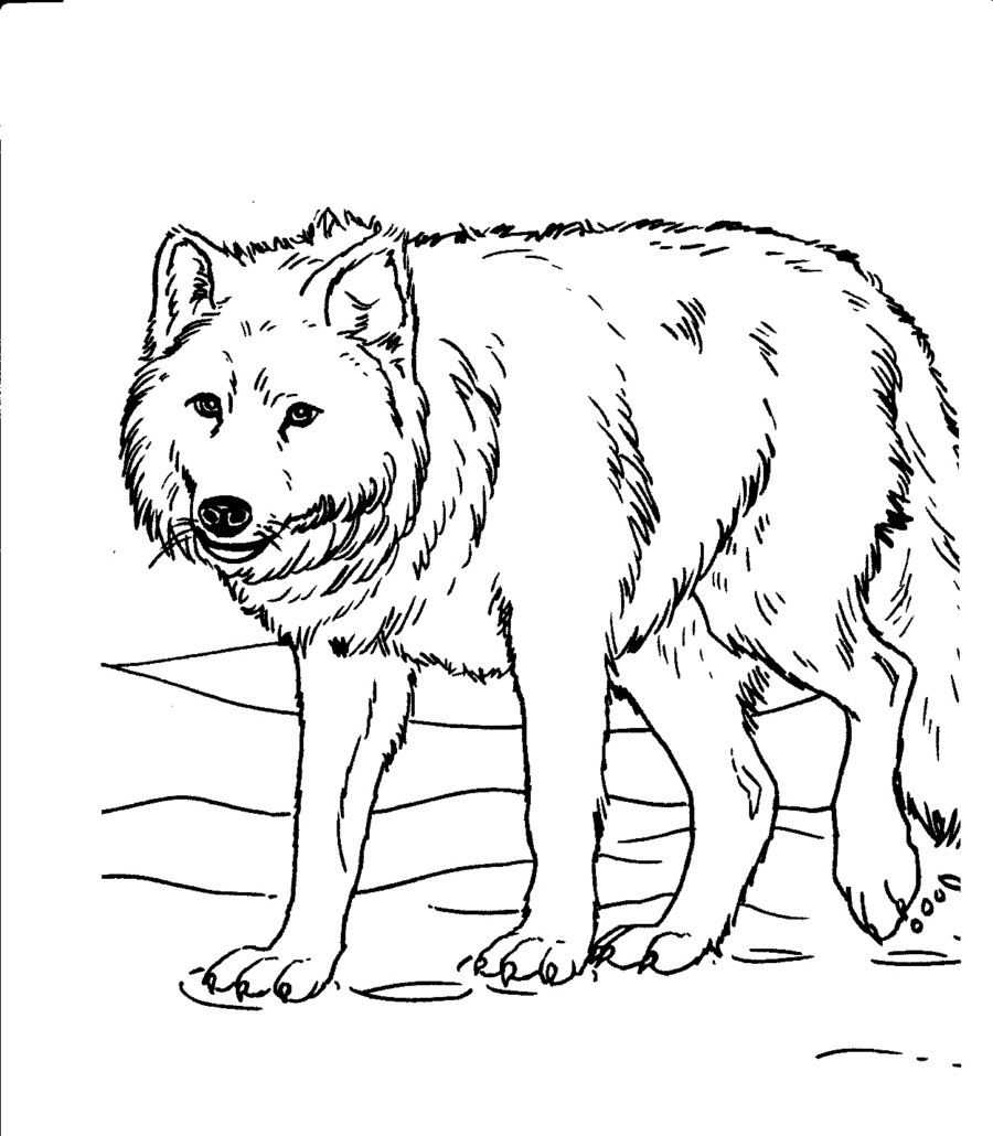 wolf pictures to color and print fantasy wolf printable adult coloring page from favoreads to and color pictures wolf print