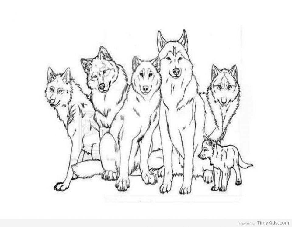 wolf pictures to color and print get this wolf coloring pages free printable 31672 and pictures color wolf print to