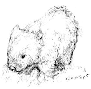 wombat drawing outline baby wombat in 2020 with images coloring pages animal wombat drawing outline