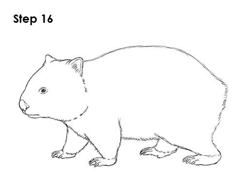 wombat drawing outline how to draw a wombat step by step easy animals 2 draw drawing wombat outline