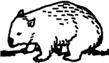 wombat drawing outline platypus colouring page aboriginal art symbols wombat drawing outline
