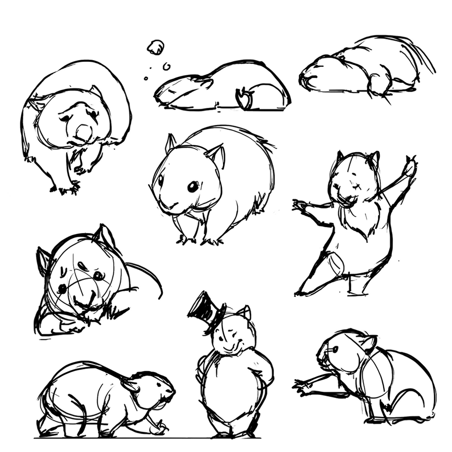 wombat drawing outline simple animal pencil drawings outline wombat drawing