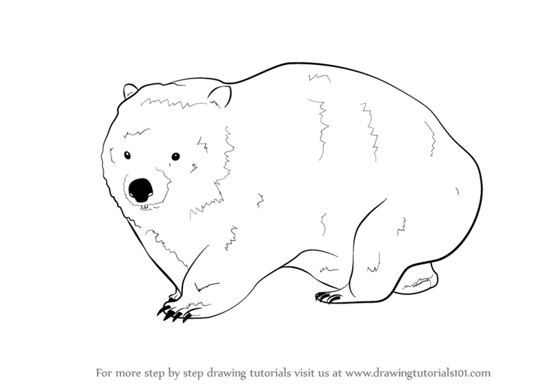 wombat drawing outline wombat by kata on deviantart drawing outline wombat
