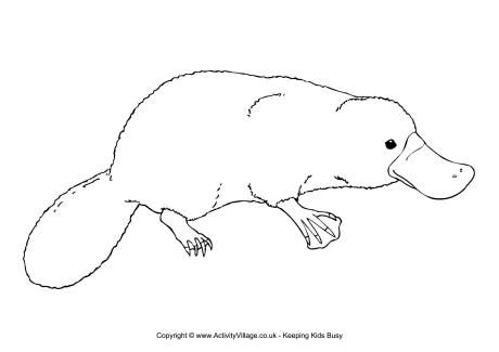 wombat drawing outline wombat clip art clipart best drawing wombat outline