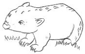 wombat drawing outline wombat drawing outline clipart panda free clipart images wombat outline drawing