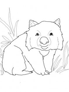 wombat drawing outline wombat outline clipart best wombat outline drawing