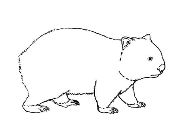 wombat drawing outline wombat silhouette free vector silhouettes wombat drawing outline