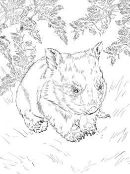 wombat drawing outline wombat silhouette free vector silhouettes wombat drawing outline 1 1