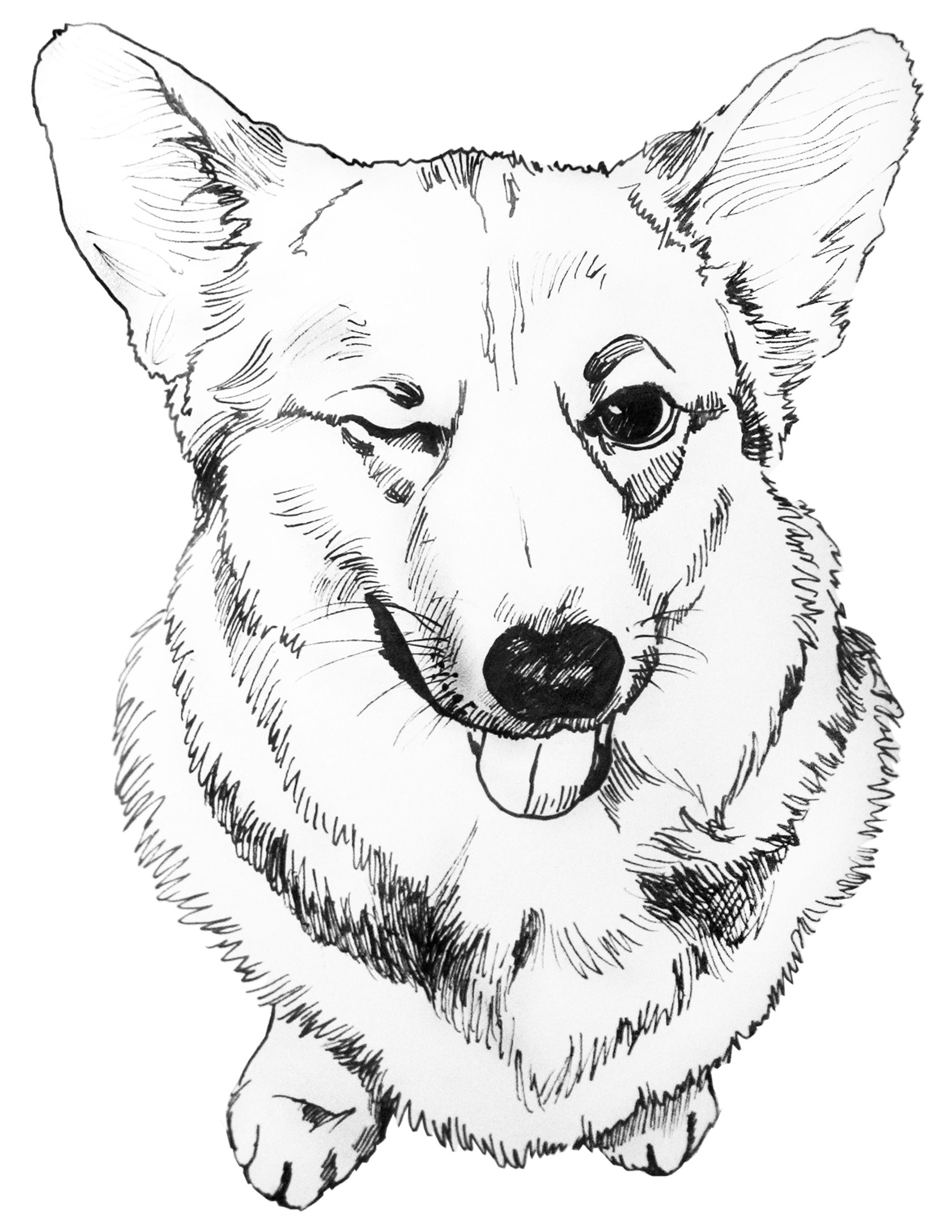 www coloring sheets corgi coloring pages to download and print for free sheets www coloring
