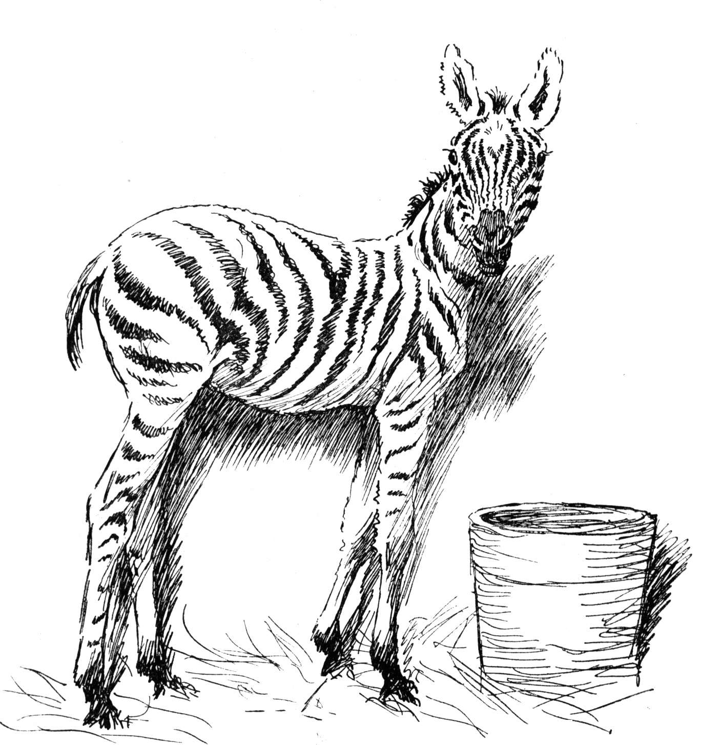zebra coloring images free zebra coloring pages coloring images zebra