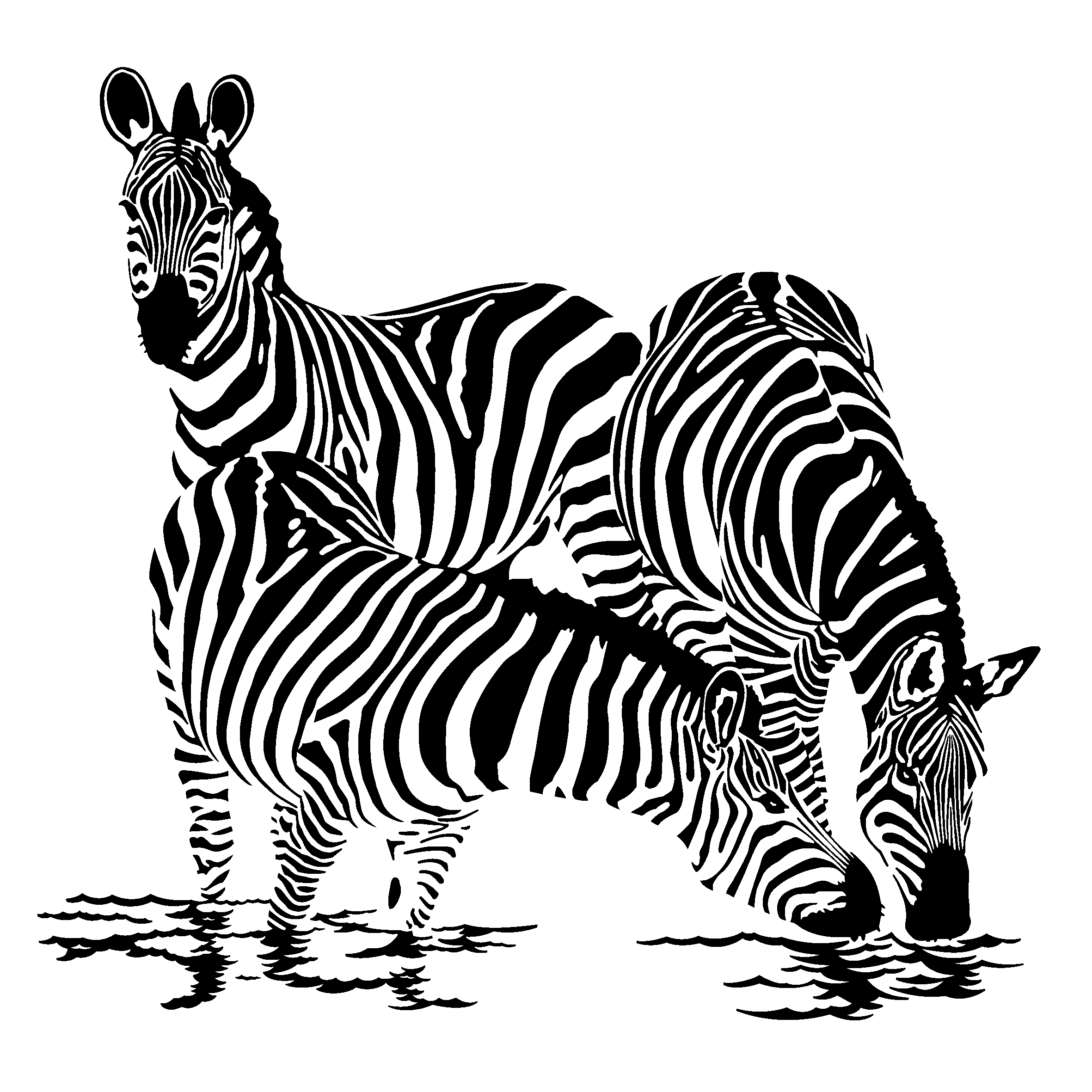 zebra coloring images zebra coloring pages download and print zebra coloring pages coloring zebra images