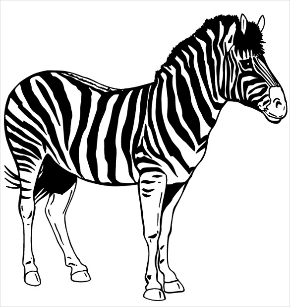 zebra drawing cute baby zebra drawing free download on clipartmag zebra drawing