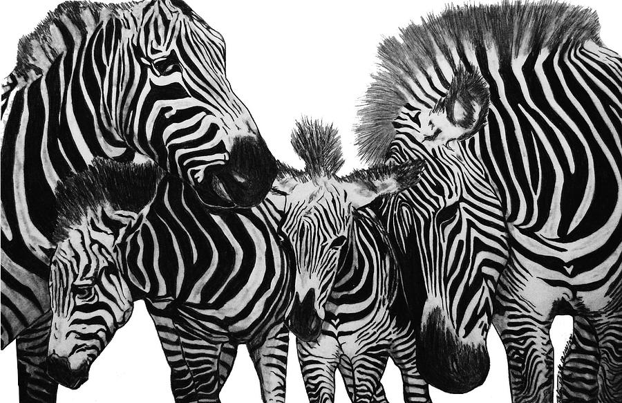 zebra drawing zebra line drawing free download on clipartmag drawing zebra