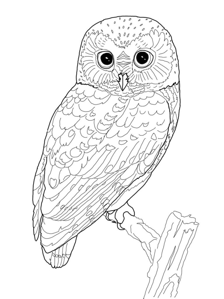 a coloring picture owl coloring pages for adults free detailed owl coloring picture coloring a