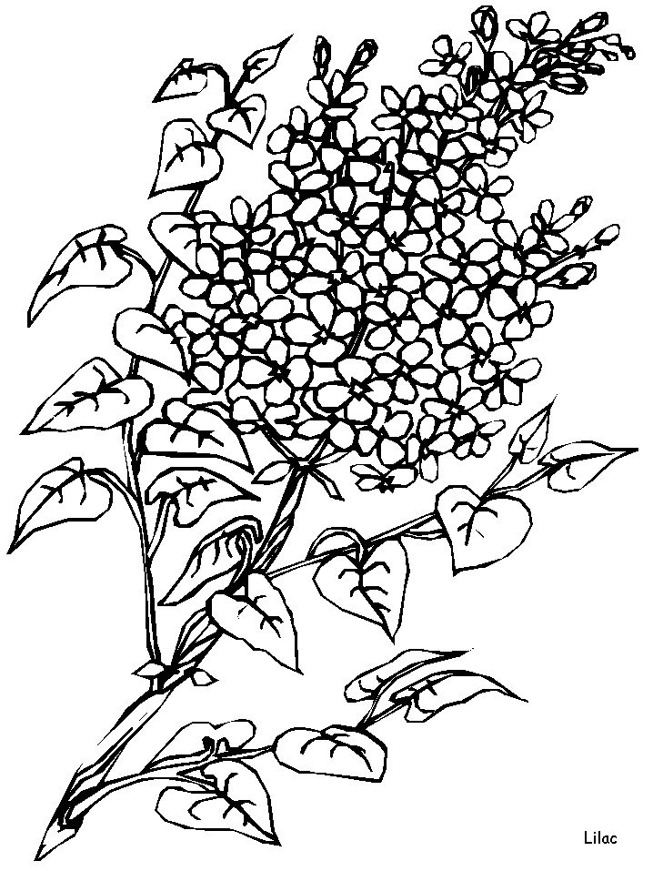 abstract flower coloring pages abstract flower mandala advanced coloring page for adults abstract coloring flower pages