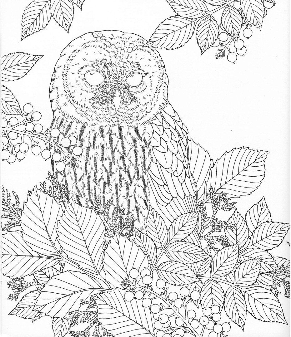 abstract owl coloring pages owl coloring page find the owl adult coloring abstract owl owl coloring abstract pages