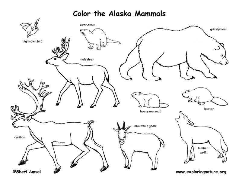 alaska coloring pages alaska coloring page google search geography for kids coloring alaska pages