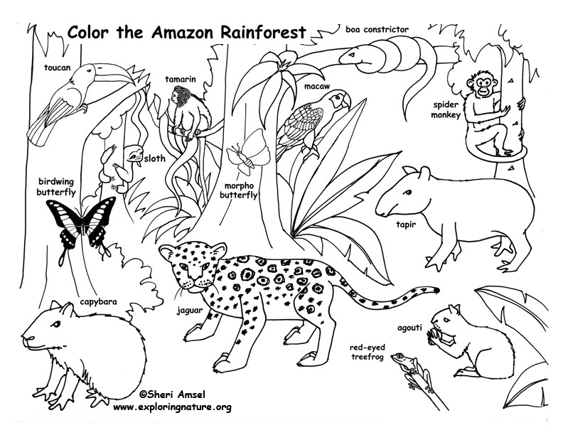 amazon rainforest pictures to print amazon rainforest coloring pages at getcoloringscom amazon pictures to print rainforest