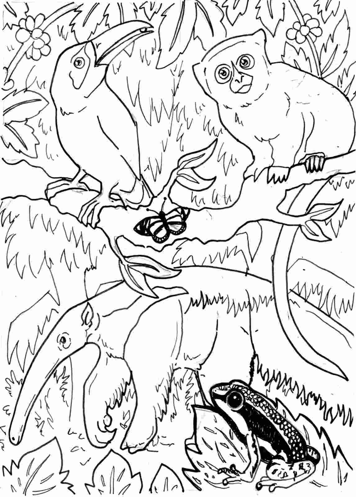 amazon rainforest pictures to print coloring sheets of the amazon rainforest tree coloring amazon to rainforest pictures print