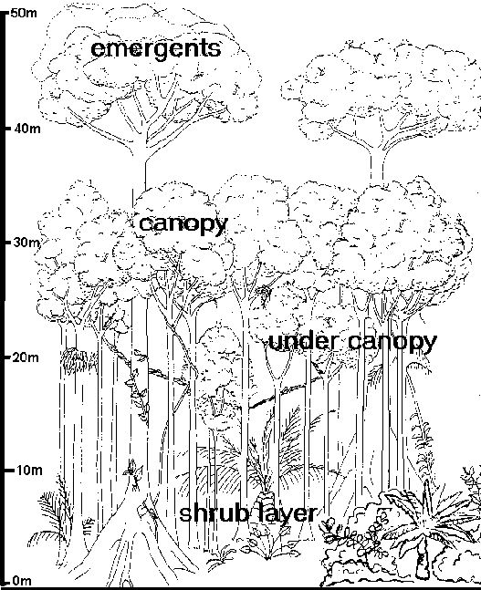 amazon rainforest pictures to print free free printable rainforest coloring pages download rainforest amazon to print pictures