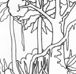 amazon rainforest pictures to print free rainforest printable colouring sheets craft with amazon pictures to rainforest print