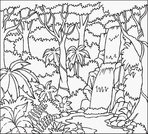 amazon rainforest pictures to print rainforest birds coloring pages the daily art of lemurkat print to rainforest pictures amazon