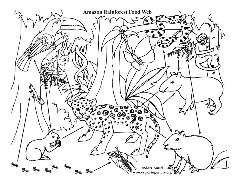 amazon rainforest pictures to print rainforest coloring pages at getcoloringscom free amazon print pictures rainforest to