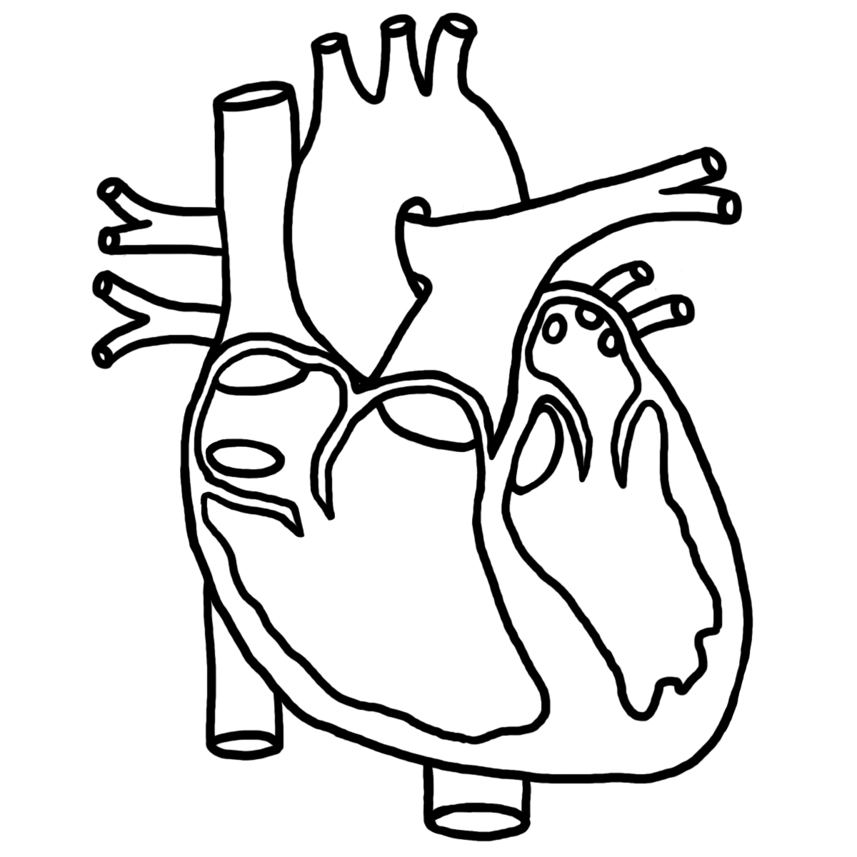 anatomical heart coloring pages anatomical heart coloring pages coloring heart anatomical pages