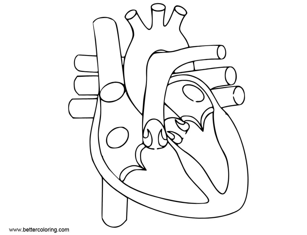 anatomical heart coloring pages heart anatomy coloring pages sketch free printable coloring heart pages anatomical