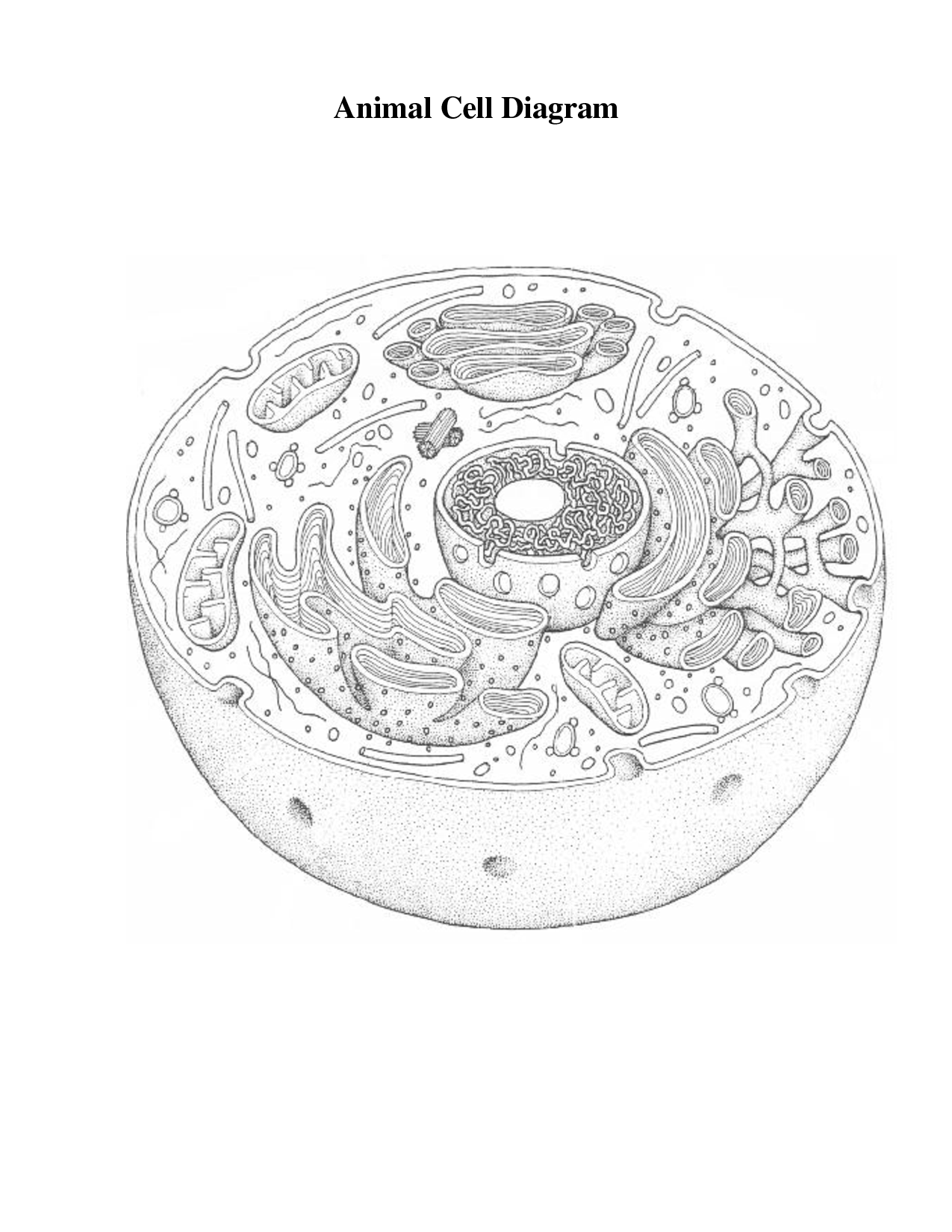 animal cell diagram coloring 3d animal cell coloring pages free printable coloring pages cell diagram coloring animal