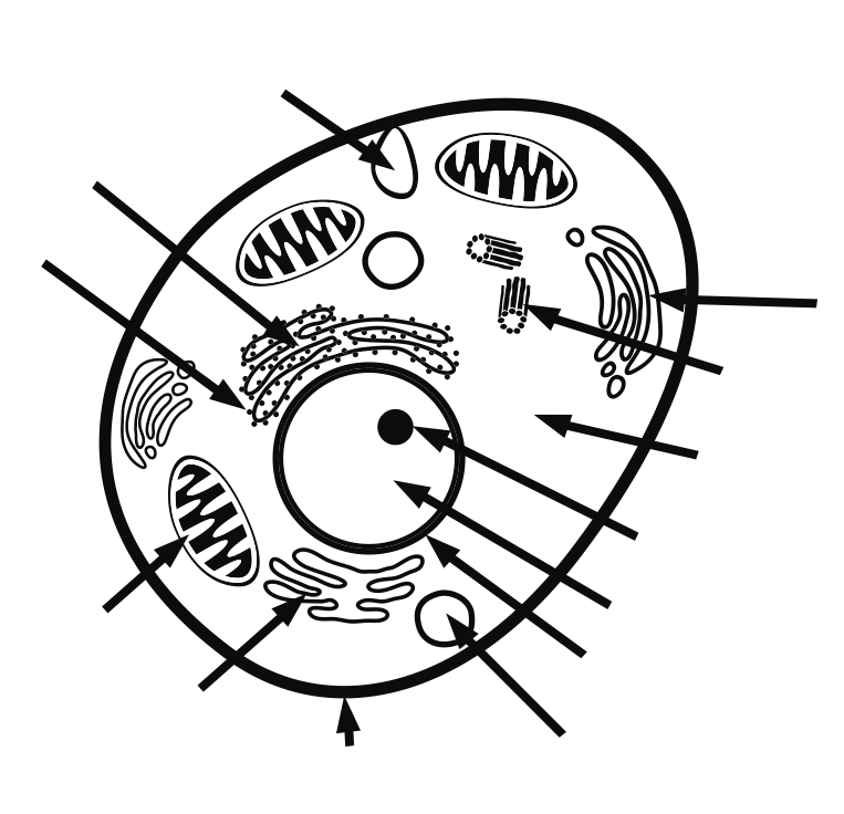 animal cell diagram coloring animal cell coloring page coloring home cell coloring animal diagram